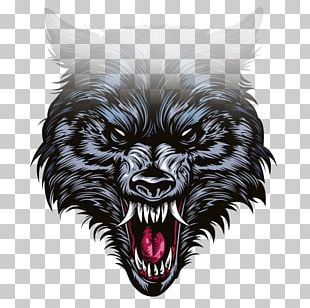 Gray Wolf Drawing Illustration PNG