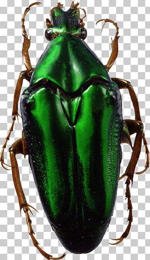 Bug Green PNG