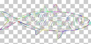 Marine Biology Illustration Drawing Marine Mammal PNG