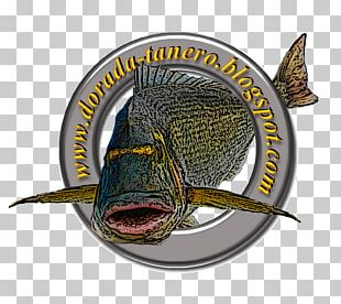 Surf Fishing Fish Hook Gilt-head Bream Catch And Release PNG
