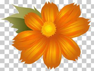 Portable Network Graphics Flower Desktop PNG