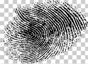 Fingerprint Line Art Drawing PNG