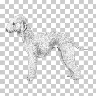 Dog Breed Whippet Bedlington Terrier Italian Greyhound PNG