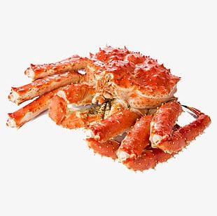 King Crab Crab PNG