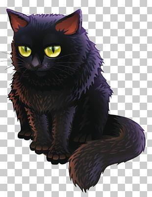 Bombay Cat Black Cat Kitten PNG