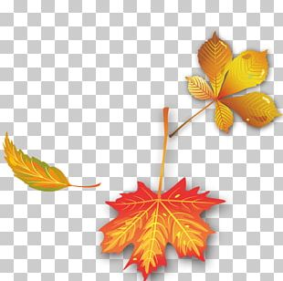 Maple Leaf Autumn PNG