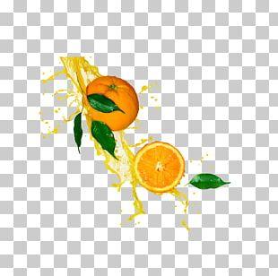 Orange Juice Lemonade Stock Photography PNG
