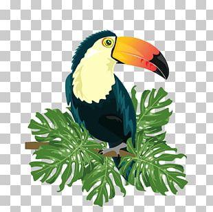 Ramphastinae Bird Ramphastos Illustration PNG