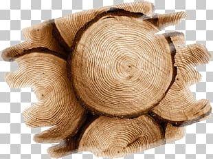 Wood Teak Tree Swarf Construction En Bois PNG