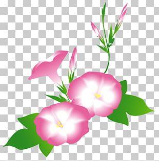 Petal Floral Design Rosaceae Plant Stem PNG