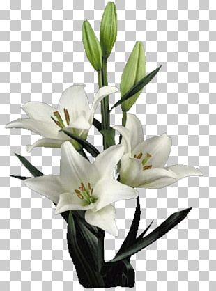 Lilium Cut Flowers Artificial Flower Floral Design PNG