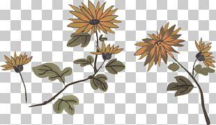 Chrysanthemum Flower PNG