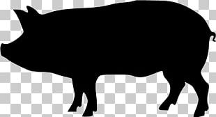 Domestic Pig Silhouette PNG