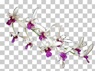 Moth Orchids Floral Design Cut Flowers Body Jewellery PNG