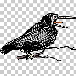 Common Raven Eurasian Magpie Bird Singing PNG