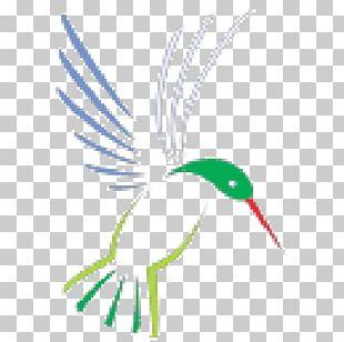 Beak Bird Feather Line Art PNG