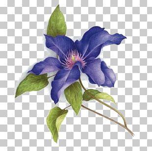 Watercolor Painting Art Botany PNG