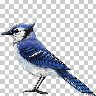 All About Birds Blue Jay Wall Decal PNG