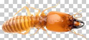 Premier Termite & Pest Control Ant Exterminator PNG