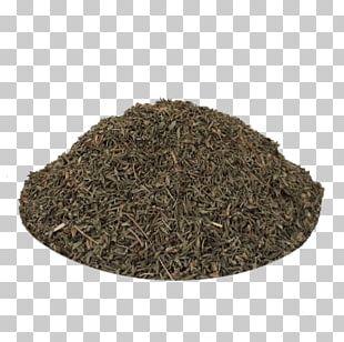 Nilgiri Tea Hōjicha Spice Tea Plant PNG