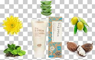 Cleanser Sunscreen Lotion Foam Fermentation PNG