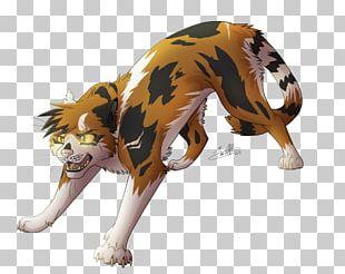 Warriors Crookedstar Firestar Cat Tigerstar PNG