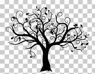 The Fig Tree Tree Of Life Family Tree PNG