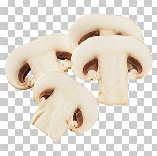 Edible Mushroom Oyster Mushroom Common Mushroom Fungus PNG
