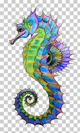 Seahorse Drawing Art PNG