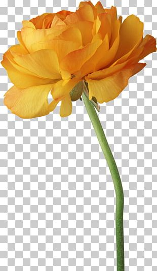 Mothers Day Flower National Grandparents Day PNG