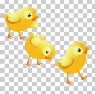 Chicken Buffalo Wing Duck Illustration PNG