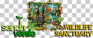 Amazon Rainforest Tropical Rainforest Drawing Biome PNG