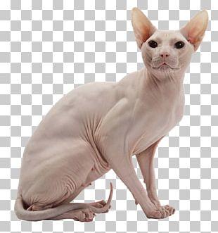Sphynx Cat Donskoy Kitten Peterbald American Wirehair PNG