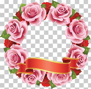 Rose Stock Photography PNG