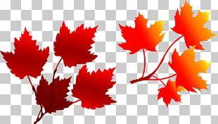Autumn Deciduous Leaf Illustration PNG