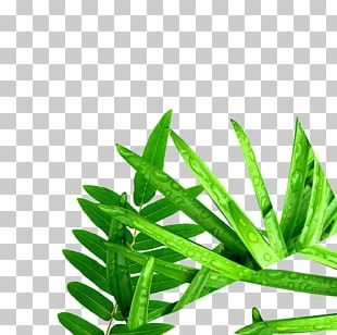 Leaves Of Grass Computer File PNG