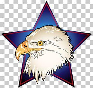 Bald Eagle Bird PNG