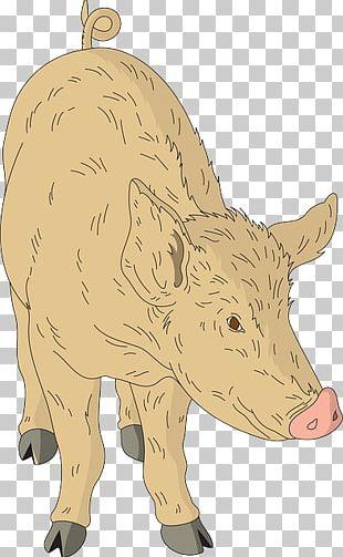 Domestic Pig Cattle Animal PNG