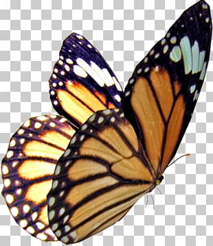 Monarch Butterfly Insect Stock Photography PNG