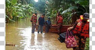 Flood Tree Tourism PNG