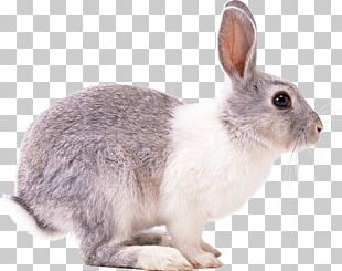 Easter Bunny Hare European Rabbit Domestic Rabbit Squirrel PNG