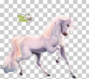 Unicorn Fan Art Mane Legendary Creature PNG