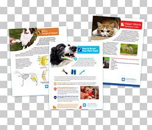 Veterinarian Digital Signs Graphics Brochure Advertising PNG