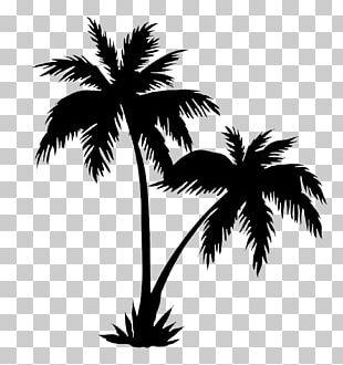 Arecaceae Drawing Tree PNG