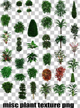Tropical Plant Types Shrub Tree PNG