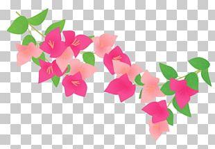 Bougainvillea Plants Petal PNG