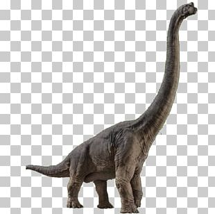 Brachiosaurus Velociraptor Spinosaurus Jurassic Park Builder Jurassic World Evolution PNG