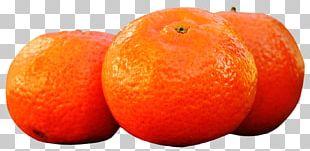 Clementine Tangerine Tangelo Grapefruit Bitter Orange PNG
