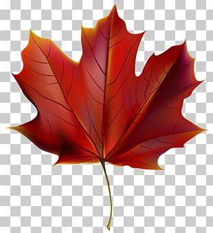 Autumn Leaf Color Red PNG