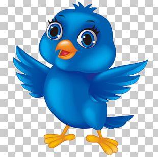 Bird Cartoon PNG